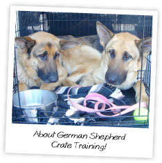 About German Shepherd  Crate Training
