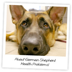 About German Shepherd  Health Problems!