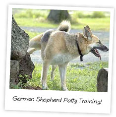 German Shepherd Potty Training
