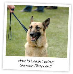 How to Leash Train a German Shepherd